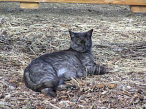 farm cat cat