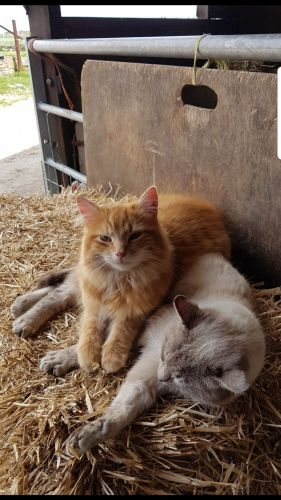 farm cat cats