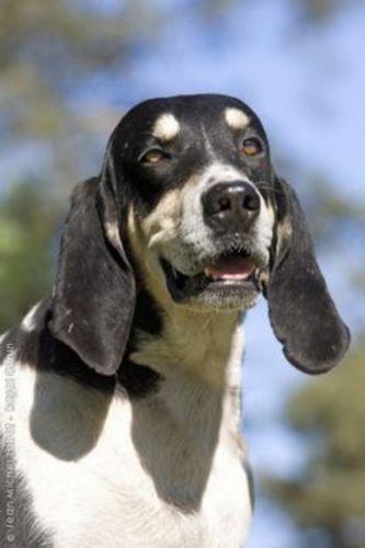 francais blanc et noir dog