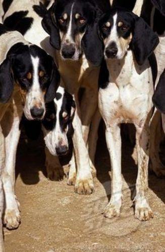 francais blanc et noir dogs