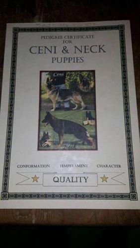 German Shepherd Puppies for sale in Miami, FL, USA. price 400USD