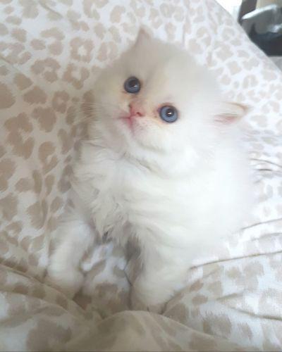 kitten bjorn