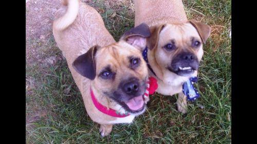jug dogs