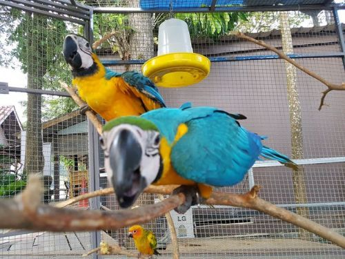Macaw Birds for sale in Los Angeles, CA, USA. price -USD