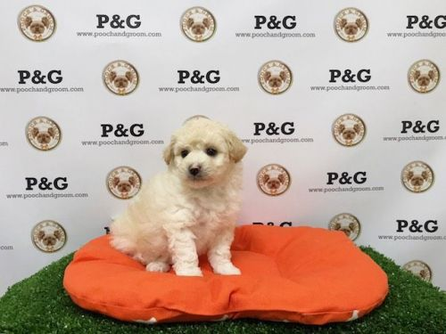 Mixed Puppies for sale in Temple City, CA, USA. price 750USD