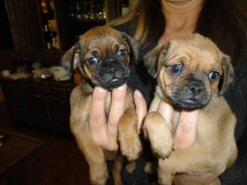 muggin puppies