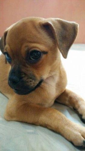 muggin puppy