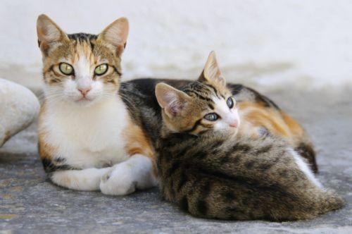 ojos azules cats