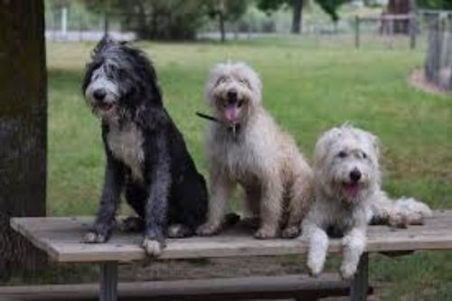 smithfield dogs