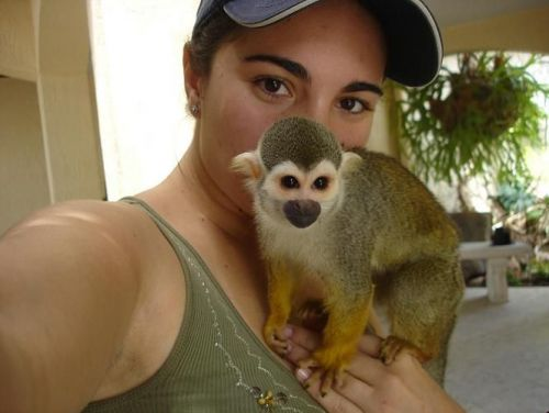 Squirrel Monkey Animals for sale in Floyd St, Houston, TX 77007, USA. price 3500USD