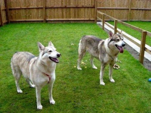 utonagan dogs