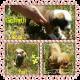 Adorable 8wk Purebred American Bulldog Puppies