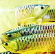 Arowana fishes and stingrays 571 210 5834