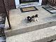 Beagles need a Home