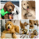 F1b Goldendoodles for sale
